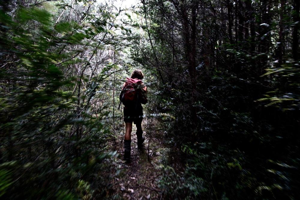 Florentine Valley - Wild Pedder