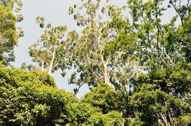 Springbrook_national_park_GoldCoast_Yoga_Teacher_training_Akhanda_Yoga_Australia_3.jpg