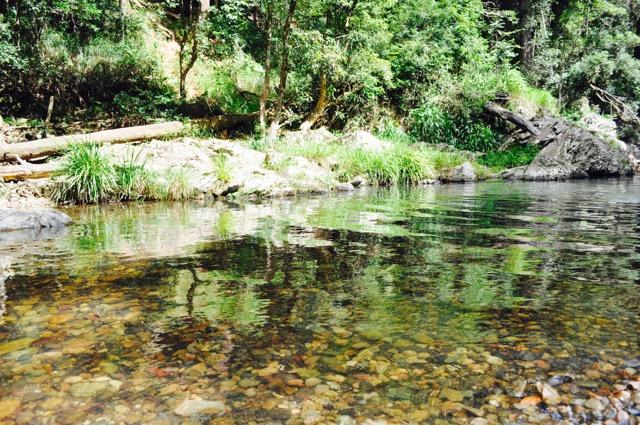 Springbrook_national_park_GoldCoast_Yoga_Teacher_training_Akhanda_Yoga_Australia_5.jpg