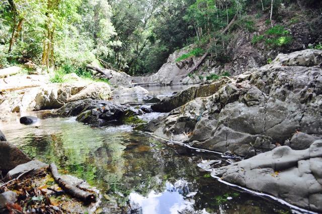 Springbrook_national_park_GoldCoast_Yoga_Teacher_training_Akhanda_Yoga_Australia_10.jpg