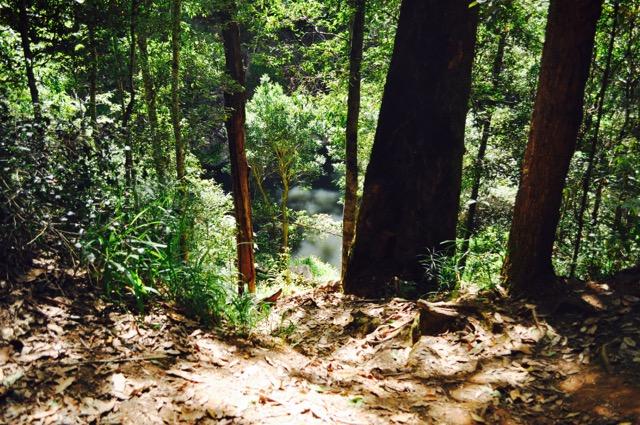 Springbrook_national_park_GoldCoast_Yoga_Teacher_training_Akhanda_Yoga_Australia_19.jpg
