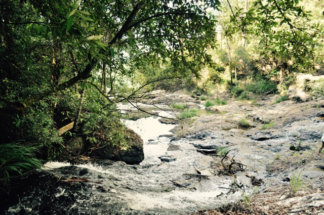 Springbrook_national_park_GoldCoast_Yoga_Teacher_training_Akhanda_Yoga_Australia_23.jpg
