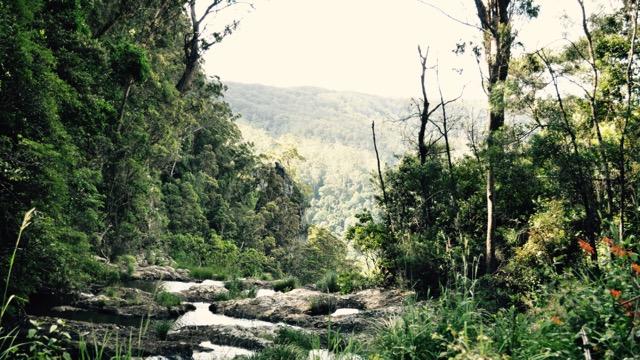 Springbrook_national_park_GoldCoast_Yoga_Teacher_training_Akhanda_Yoga_Australia_26.jpg