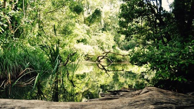 Springbrook_national_park_GoldCoast_Yoga_Teacher_training_Akhanda_Yoga_Australia_27.jpg