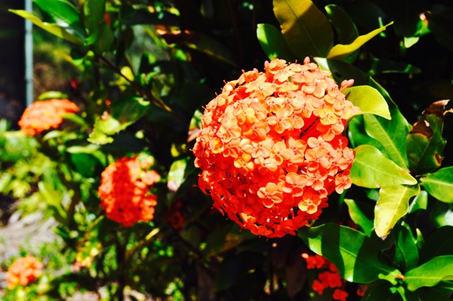 Nature_Akhanda_Yoga_Australia_Yoga_Teacher_training_retreat_centre_GoldCoast_44.jpg
