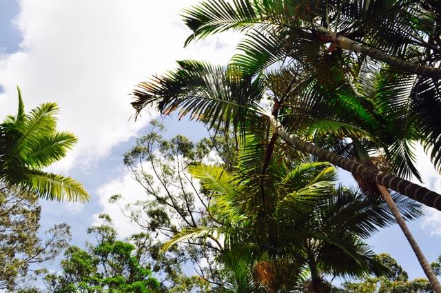 Trees_Akhanda_Yoga_Australia_Yoga_Teacher_training_retreat_centre_GoldCoast_.jpg