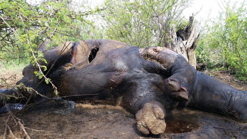 Photo credit: Madikwe Game Reserve