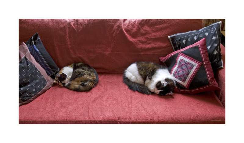 Cats on sofa.jpg