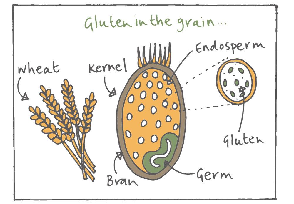 gluten.jpg