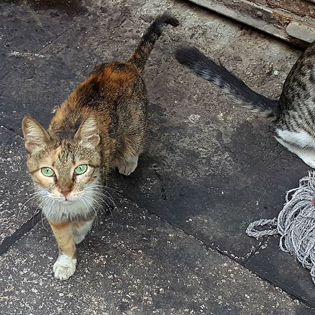 Cats of Cairo #cats #cairo