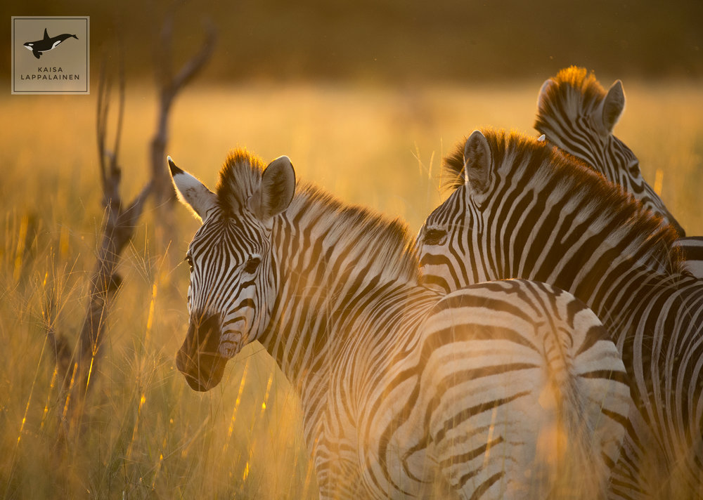 Botswana 1.jpg