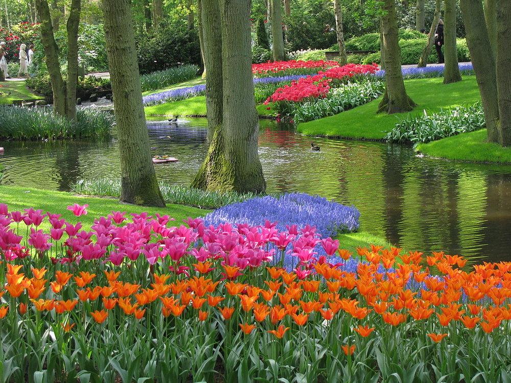 keukenhof-tulips--wikipedia-1067px-20090501-03_Tulpenweekend_Nederland_(0169).jpg