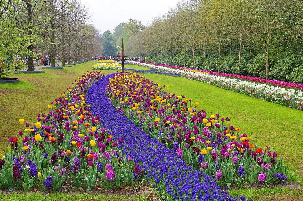 keukenhof-tulips--wikipedia-1208px-NL-keukenhof-01.jpg