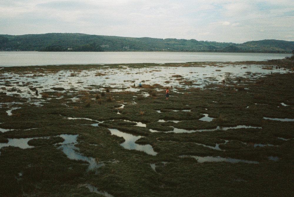 Arnside marshes