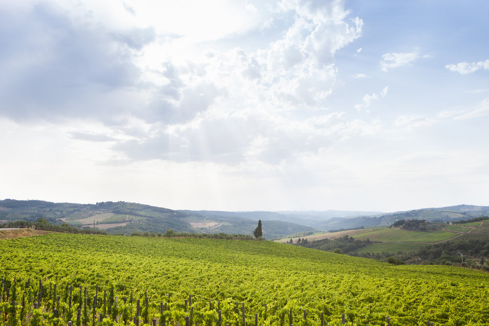 Tuscany & Florence-32.jpg