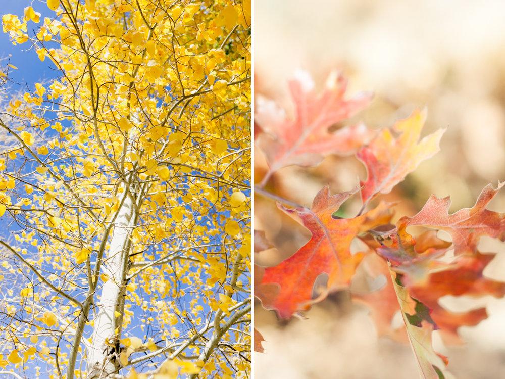 Fall Adventure-5.jpg