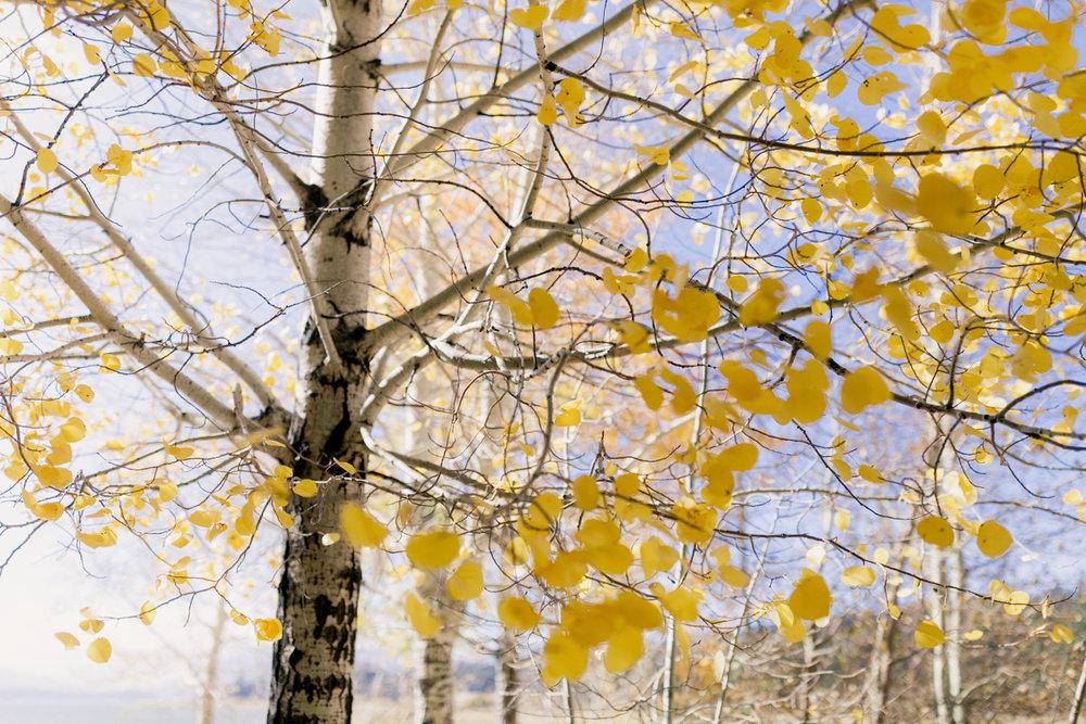 Fall Adventure-9.jpg