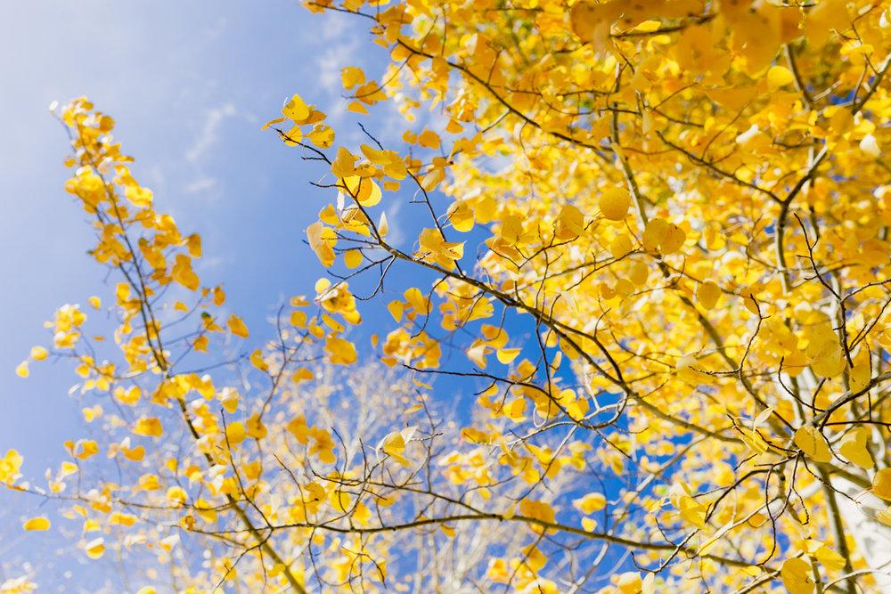 Fall Adventure-14.jpg