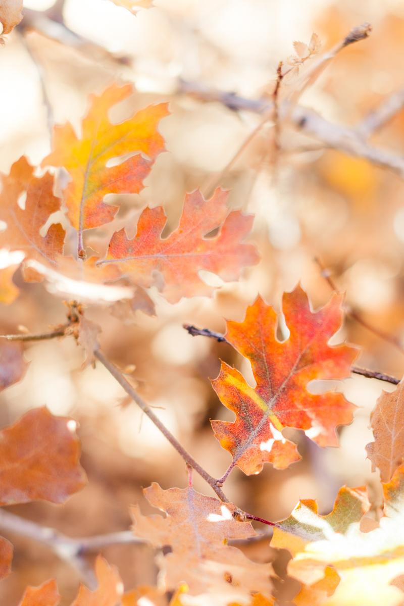 Fall Adventure SM-3.jpg