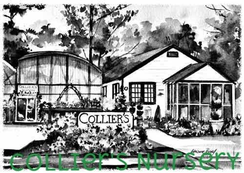 colliers nursery.jpg