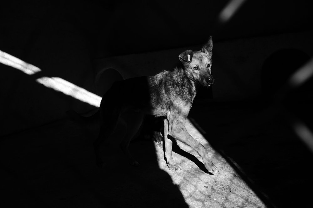 Stray dogs © Midhat Poturovic 6