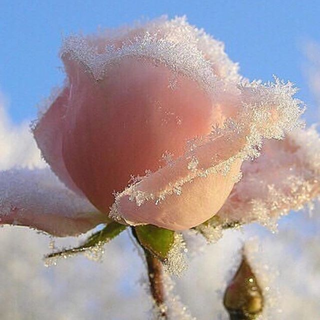 Feeling frosty!  #Repost @glossier ・・・ When you layer Rose and Mint Balm Dotcom 🌹❄️