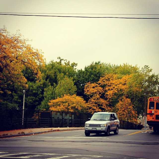 Love love love Autumn. The trees are singing in color. #autumn #happy #love #livehappily #thecitruslife #color