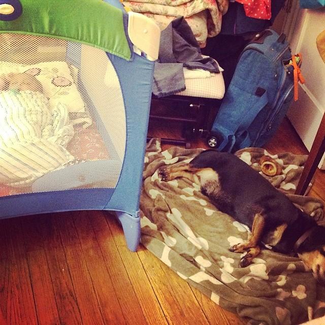 #Baby and #dog are knocked out. #babytime #proudaunty #dachshund #bedtime #sleepyhead #livehappily #thecitruslife #playpen #swaddle