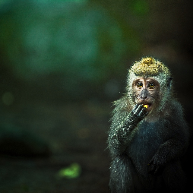 I would love to meet this little guy! Nature / Animal / Monkey by ►CubaGallery on Flickr.