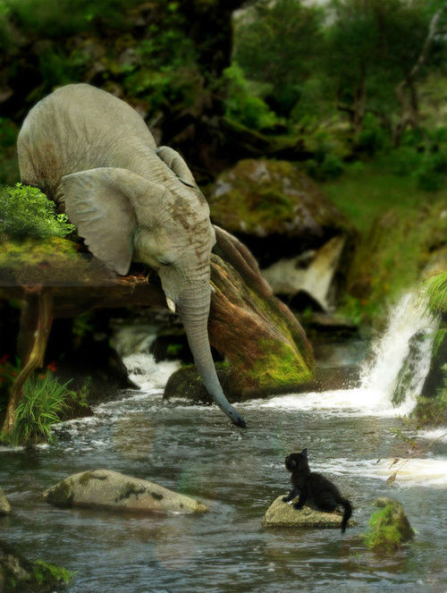 odolnost: drasticandfantastic: Volantene elephant rescuing a friend from the river are  you shitting me how cute is this this is actually fantastic though