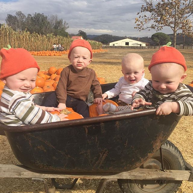 One good thing about potty training is getting to spend a LOT of quality time with your toddlers showing them pictures of them when they were babies 👶🏻 Here's one of my fav pics from their first pumpkin patch trip 🧡 #quadruplets #tbt