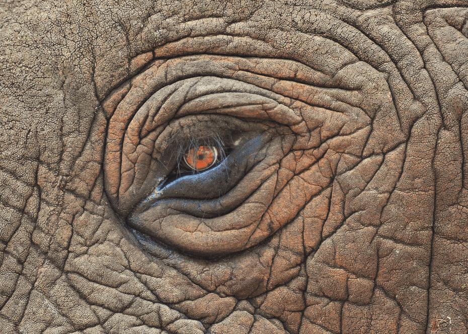 elephanteye-min.png