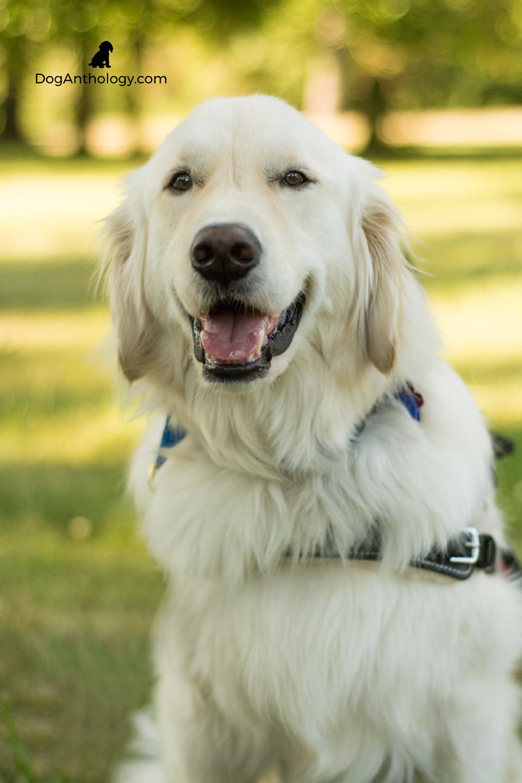 dogportrain