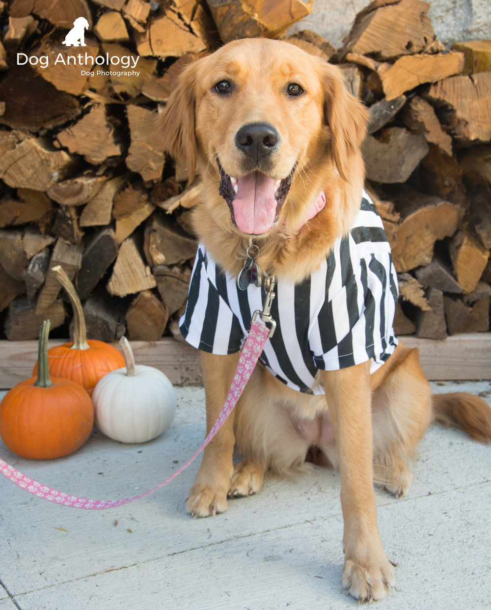 Can this dog referee my kids' next T-Ball game?