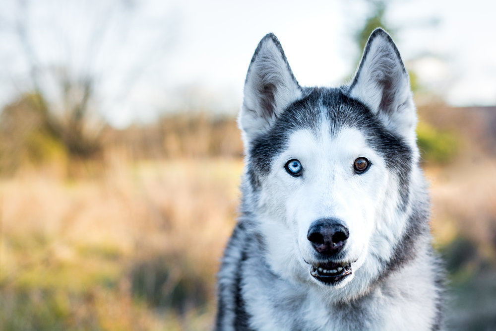 Capture your dog's unique personality and features. -