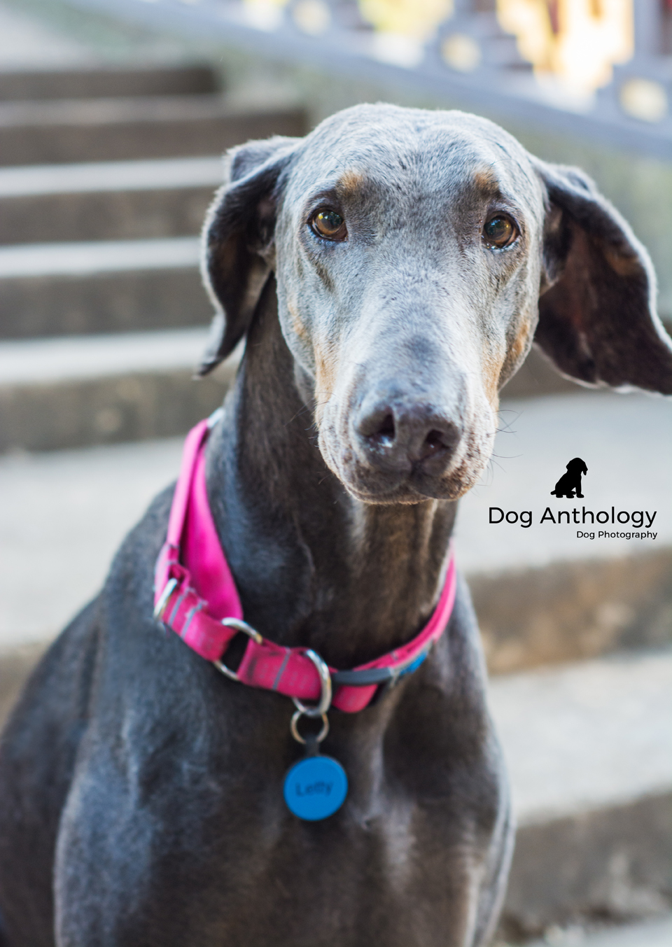 Look into those soulful eyes! Can't you just see her sweet personality shining through?