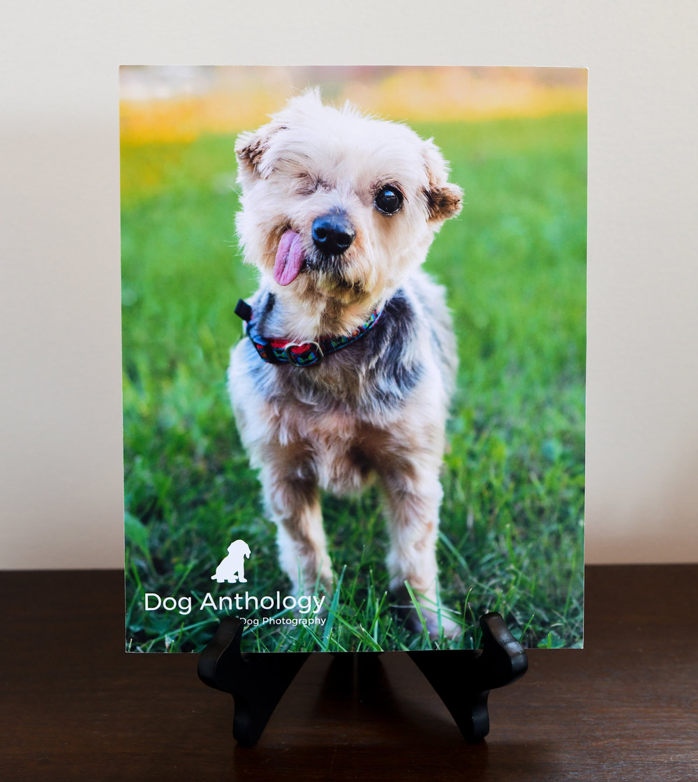 Standout Prints - Standout prints are another great option for printing. Standouts can sit on an easel or hang directly on the walls. (If you prefer canvas or acrylic prints, those styles can also be made available to you.)