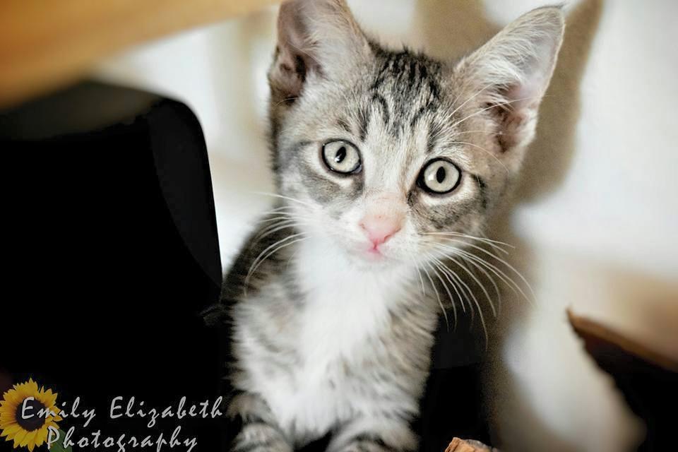adoptable cat.jpg