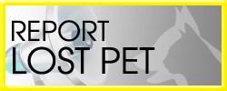 lostandfound_reportlostpet1.jpg