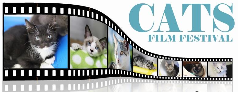 cats film fest.jpg