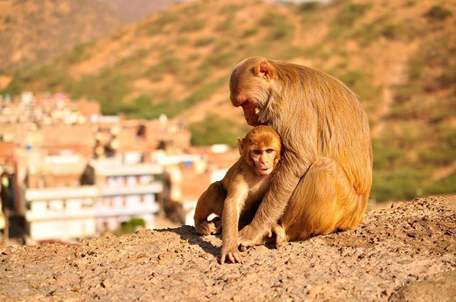 Dreaming of warmer weather and brighter days ☀️ And looking forward to sharing the second part of Liz Selbee's language story this week! Stay tuned 🗓#travel #language #languagelearners #monkeys #animals #languagejourney #hindi