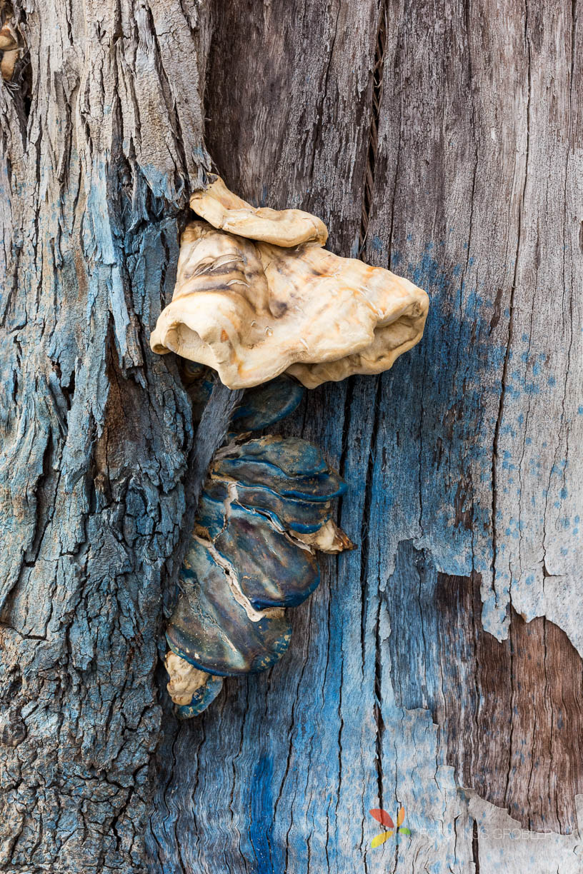 Fungi Growing From a Dead Tree Stump