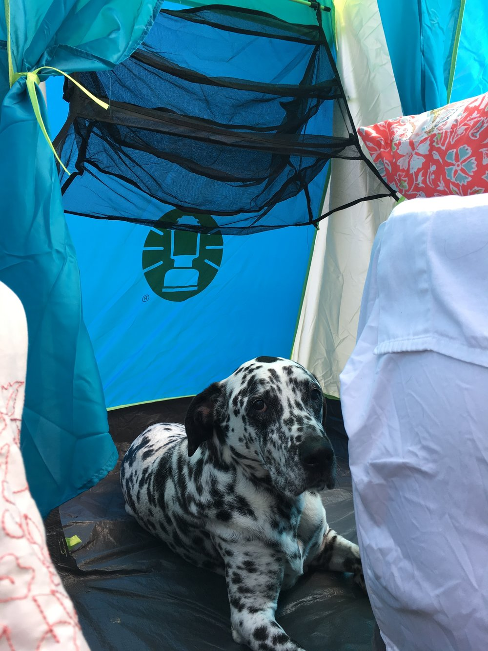 Our Double Tents come equipped with a spacious built-in closet, large enough to comfortably sleep a Large to Extra Large Furry Friend. Hanging Shelves allow for additional storage and organization.