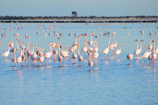 delta-del-ebro-flamencos.jpg