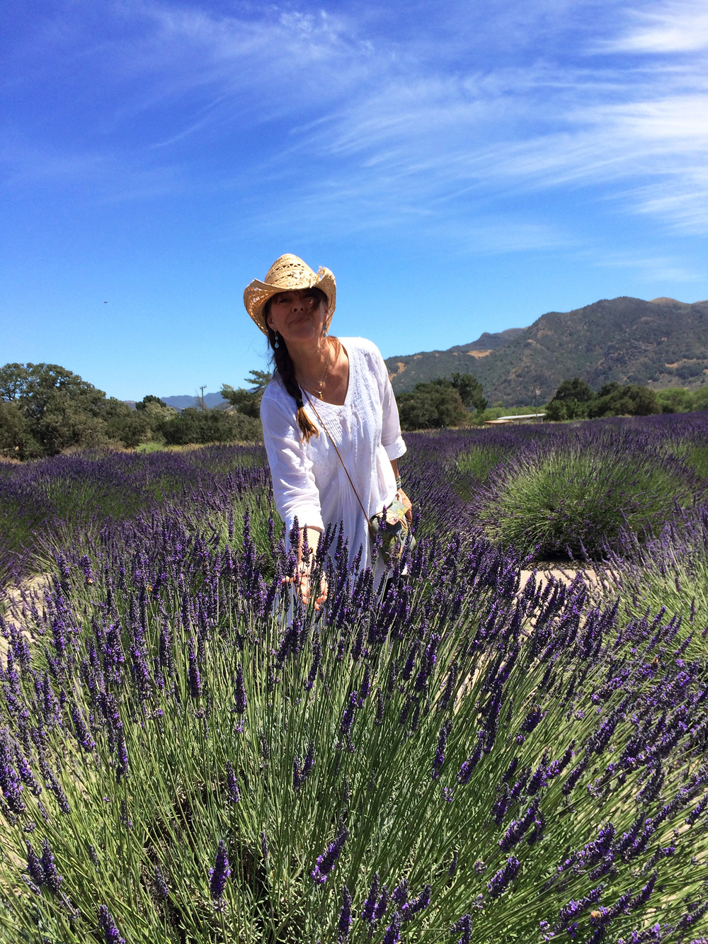 Discovering new lavender growers, Santa ynez valley, ca