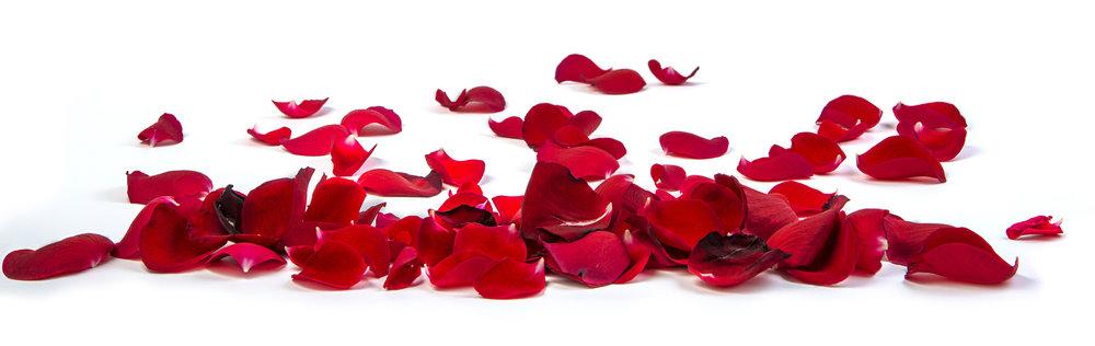 Red Rose Petals.jpg