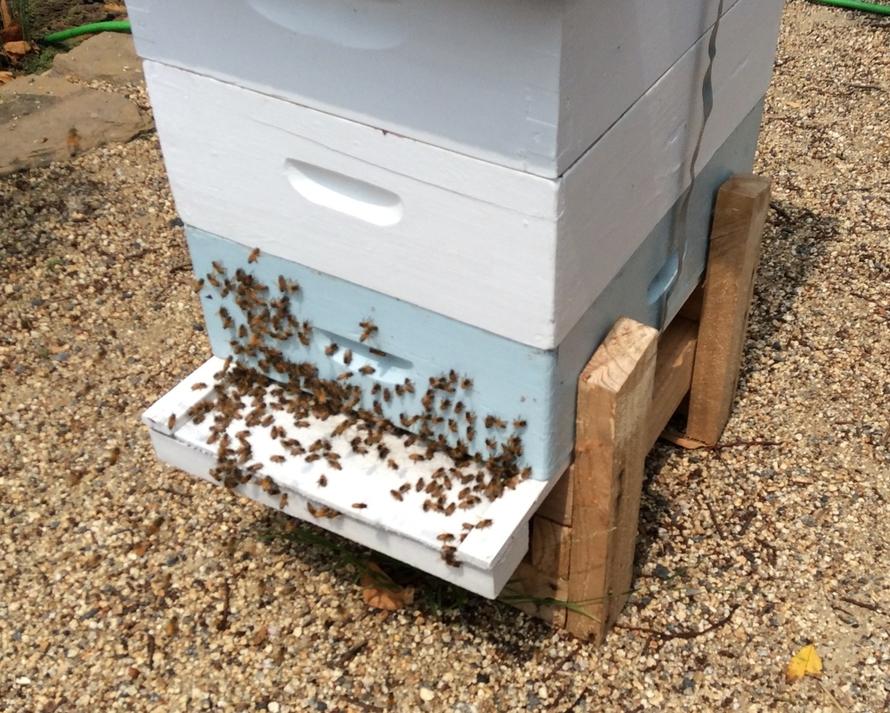 Bees Ventilating the Hive