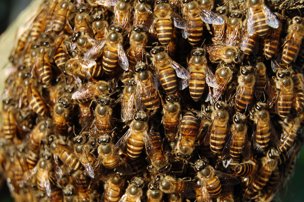 Bees, bees, bees