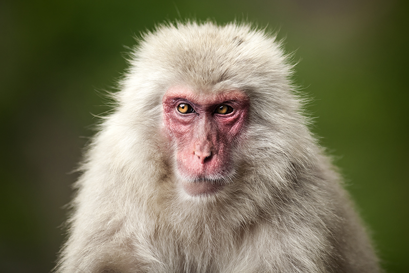Suspicious Monkey