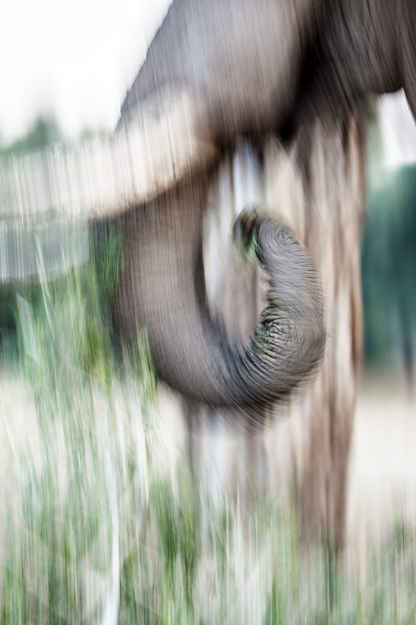 Trunk In Motion